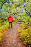 Asbyrgi forest. A tourist is walking through the forest on the bottom of Asbyrgi Canyon in Northern Iceland Royalty Free Stock Photography