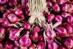 ascalonicum лукабатуна & x28; shallots& x29; или красный лук Стоковое Изображение RF