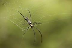 Ascendente cercano de la araña Imagen de archivo