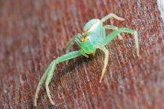 Ascendente cercano de la araña Fotos de archivo