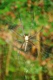 Ascendente cercano de la araña Foto de archivo libre de regalías