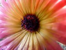 Ascendente cercano de la flor Fotos de archivo