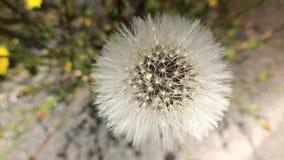 Ascendente cercano de la flor almacen de video