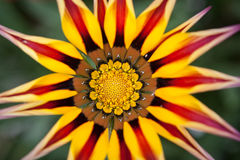 Ascendente cercano de la flor Fotos de archivo libres de regalías