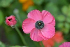Ascendente cercano de la flor Imagen de archivo