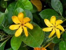 Ascendente cercano de la flor Imágenes de archivo libres de regalías