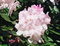 Ascendente cercano de la flor Fotografía de archivo libre de regalías