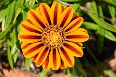 Ascendente cercano de la flor Imagen de archivo libre de regalías