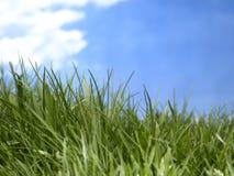 Ascendente cercano de la hierba Imagen de archivo