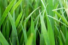 Ascendente cercano de la hierba Imagen de archivo libre de regalías