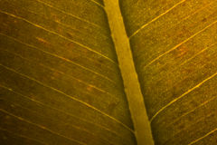 Ascendente cercano de la hoja Foto de archivo