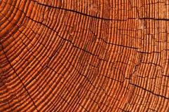 Ascendente cercano de la madera Imagen de archivo libre de regalías