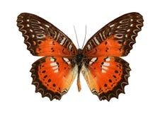 Ascendente cercano de la mariposa Imagenes de archivo