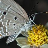 Ascendente cercano de la mariposa Fotos de archivo libres de regalías