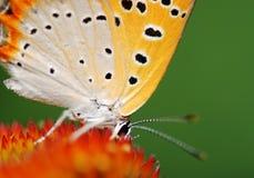 Ascendente cercano de la mariposa Imágenes de archivo libres de regalías