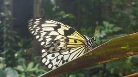 Ascendente cercano de la mariposa Fotografía de archivo
