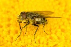 Ascendente cercano de la mosca Imagen de archivo libre de regalías
