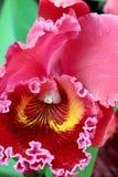 Ascendente cercano de la orquídea Foto de archivo