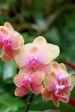 Ascendente cercano de la orquídea Imágenes de archivo libres de regalías