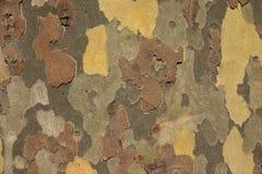 Ascendente cercano del árbol imagen de archivo libre de regalías