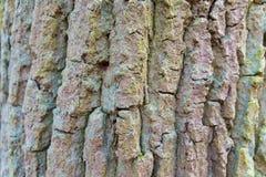 Ascendente cercano del árbol Fotos de archivo