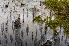 Ascendente cercano del árbol Fotos de archivo libres de regalías
