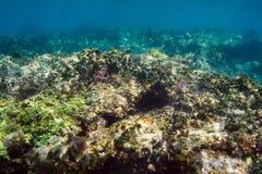 Ascendente cercano del arrecife de coral Fotos de archivo