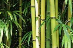 Ascendente cercano del bambú Imágenes de archivo libres de regalías