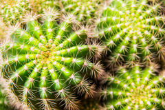 Ascendente cercano del cactus Imagenes de archivo