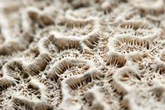 Ascendente cercano del coral fotos de archivo libres de regalías