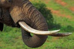 Ascendente cercano del elefante Fotografía de archivo libre de regalías