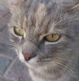 Ascendente cercano del gato Imagen de archivo libre de regalías