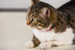 Ascendente cercano del gato imágenes de archivo libres de regalías