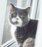 Ascendente cercano del gato Vea la cámara Fotos de archivo