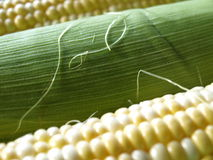 Ascendente cercano del maíz dulce Fotos de archivo libres de regalías