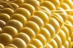 Ascendente cercano del maíz dulce y de la seda Fotos de archivo