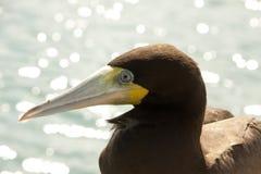 Ascendente cercano del pájaro Foto de archivo
