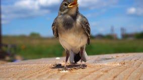 Ascendente cercano del pájaro almacen de metraje de vídeo