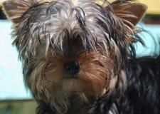 Ascendente cercano del perro Fotos de archivo libres de regalías