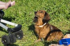 Ascendente cercano del perro Imágenes de archivo libres de regalías