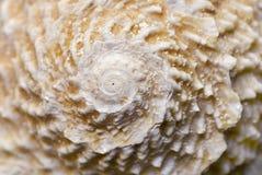 Ascendente cercano del shell Imagen de archivo libre de regalías