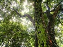 Ascendente próximo da árvore Imagem de Stock Royalty Free