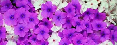 Ascendente próximo da flor foto de stock