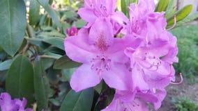 Ascendente próximo da flor Fotos de Stock Royalty Free