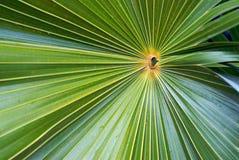 Ascendente próximo da folha de palmeira Foto de Stock