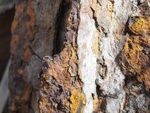 Ascendente próximo da oxidação Fotografia de Stock