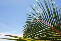 Ascendente próximo da palmeira Fotos de Stock Royalty Free