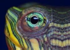 Ascendente próximo da tartaruga fotografia de stock royalty free