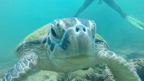 Ascendente próximo da tartaruga Fotos de Stock Royalty Free