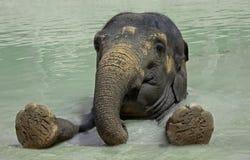 Ascendente próximo do elefante Imagem de Stock